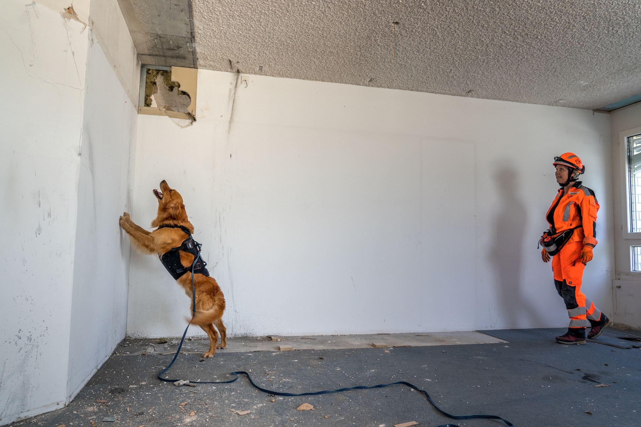 Hundetraining-1